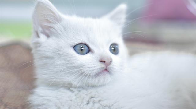Seekor kucing bernama si manis