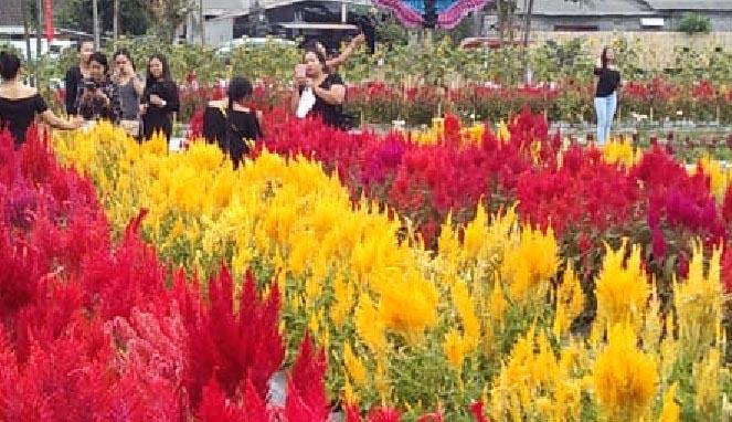 Sunflower Garden, Belayu, Marga.