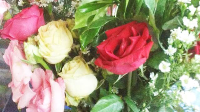 Bunga mawar aneka warna