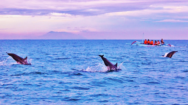 Foto ilustrasi lumba-lumba