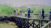 Jalan-jalan di hutan bakau Denpasar